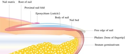 Onychogryphosis, or thickened curved nails can cause pressure & pain
