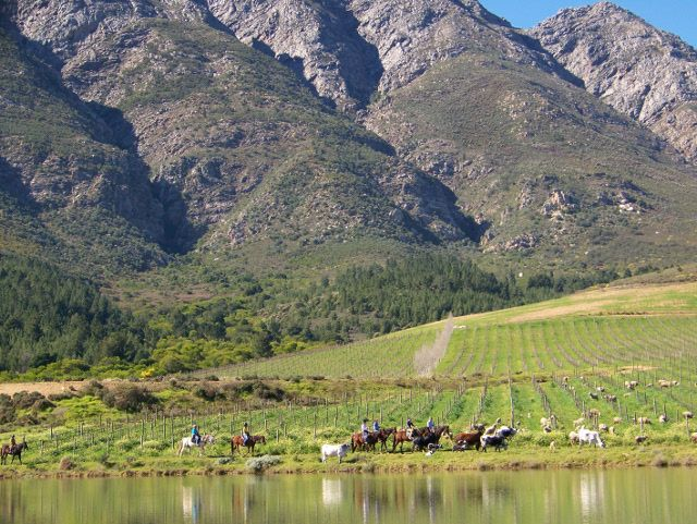 Horse riding near Tulbagh with the mountains soaring above
