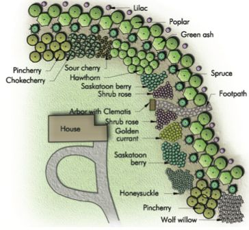"By throwing a curve at shelterbelts and using groupings of drought tolerant shrubs, you gain the dimensions of colour, sent, songbirds and fruit, pg. 12 of ""Creating the Prairie Xeriscape"" by Sara Williams"