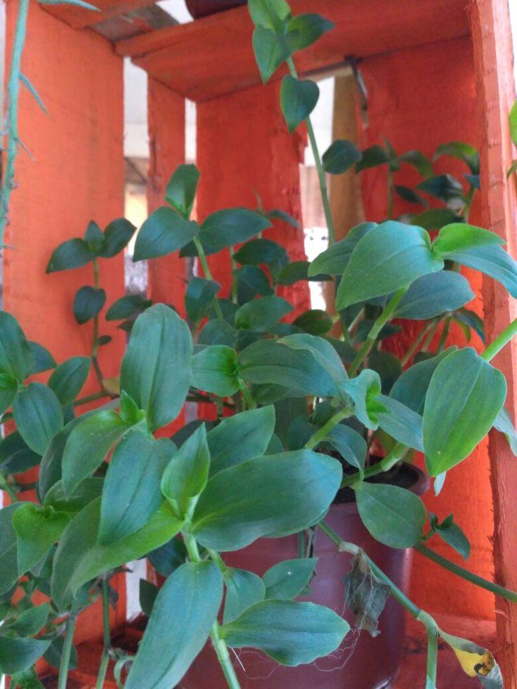 Plantas 🌿🌿🌿🌱🌱
