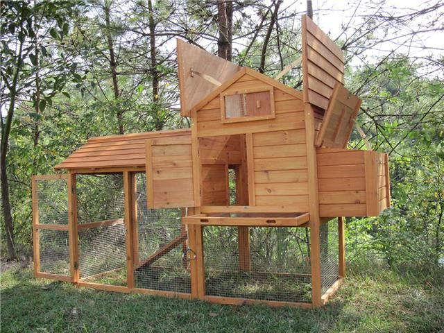 Is this the best chicken house in the world?