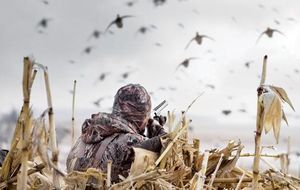 Nontoxic shot has been required for waterfowl hunting since 1992. And more states are mandating its use in select areas for upland bird hunting--even for doves on some state lands. During the past two decades, despite a plethora of nontoxic-shot types coming to the market--steel, bismuth, and tungsten composites--bird hunters have taken primarily to shooting steel shot. Steel currently makes up nearly 90 percent of all nontoxic shotshell sales.