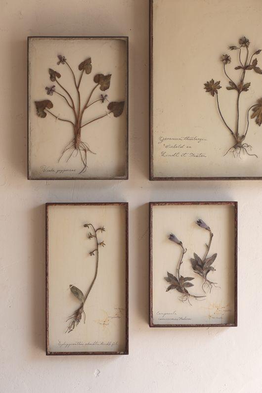 Framed pressed botanicals.