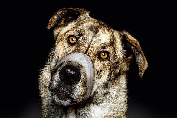 Plakate für Tierschutzverein München