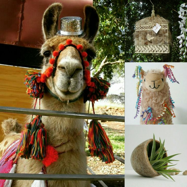 Little plush llamas were inspired by Present.