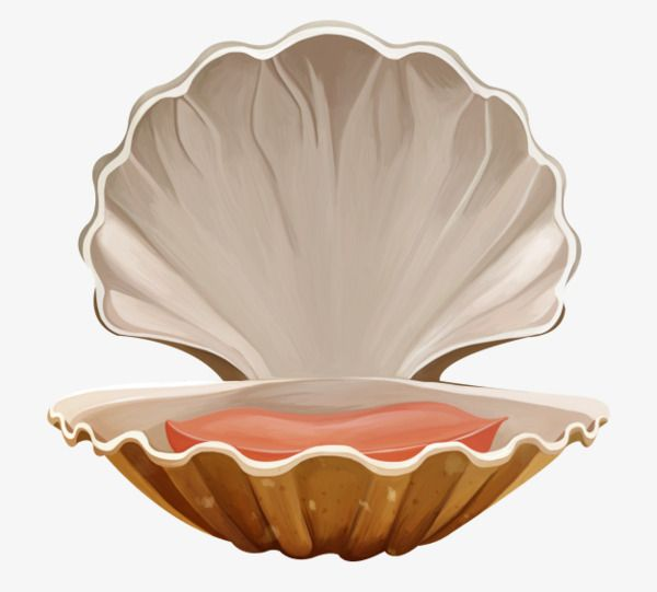 Sea Shell Sea Clipart Shell Clipart Ocean Png Transparent Clipart Image And Psd File For Free Download Sea Clipart Sea Shells Under The Sea Clipart