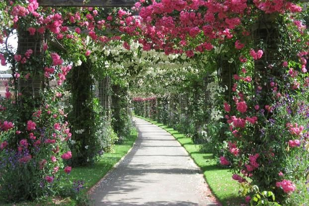 Plant Family Beds and Rose Pergola