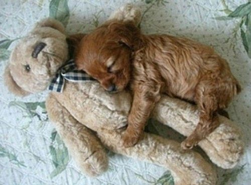 aw the puppy and its teddy!