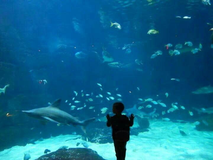 Virginia Beach Aquarium Summer Days Summer Nights Are