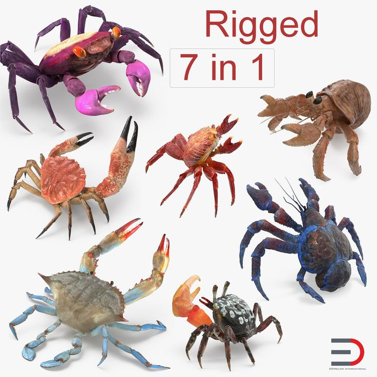 3D model Rigged Crabs Collection 2