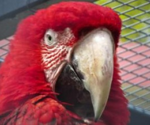 Richard Atkinson Gets 6 Months in Jail for Stabbing Death of Parrot http://www.opposingviews.com/i/society/animal-rights/richard-atkinson-gets-6-months-jail-stabbing-death-parrot