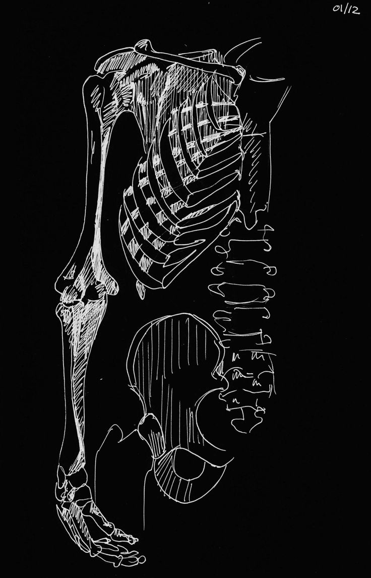 Een compleet menselijk skelet bestaat uit 206 botten. De anatomie tekeningen heb ik toegevoegd omdat die laten zien dat echte schoonheid (ook) van binnen zit.