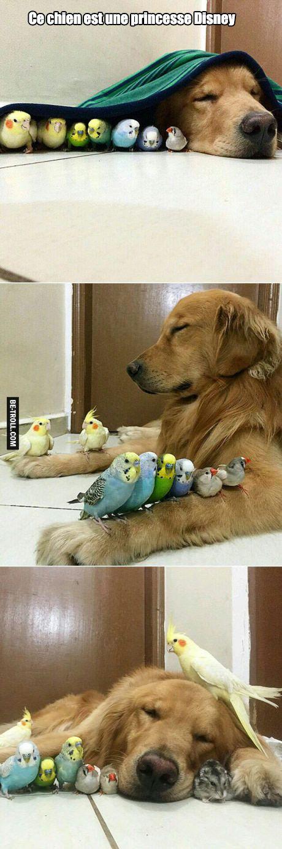 Ce chien est une princesse Disney !                                                                                                                                                                                 Plus