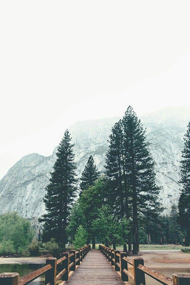 Tree .