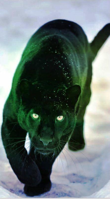 My Lunar – Reiki Empowerment Symbol – The Mystical Black Panther – Seeds Of Self