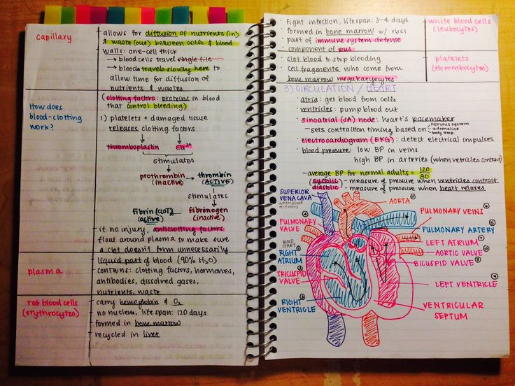 Best 25+ Nursing notes examples ideas on Pinterest Nursing - customize my clinical notes