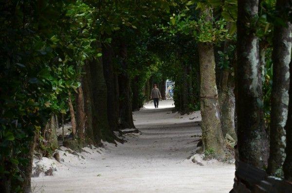 Bise Trail | Okinawa Hai