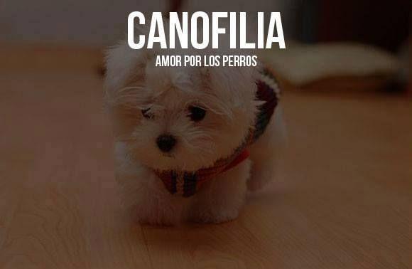 Canofilia: amor por los perros.