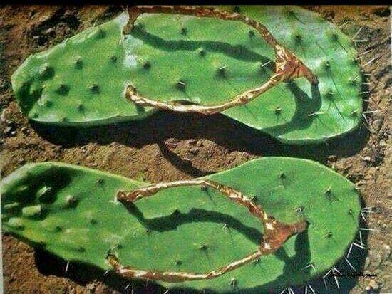 ♕cactus - Cactus FlipFlops