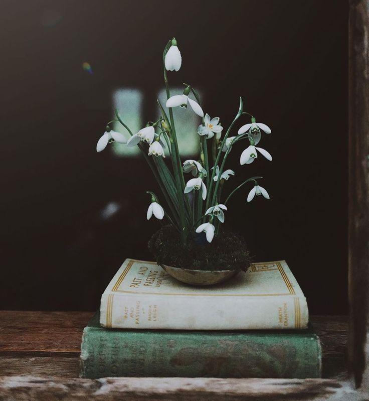 Snowdrops And Books In 2020 Flower Aesthetic Flower Display Seasonal Flowers