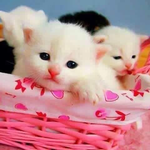 Whatsapp Dp Whatsapp Dp Follow Us Coolwhatsappstatus Beautiful Kittens Kittens Cutest Cute Animals