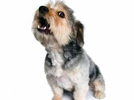 Ничего, наверное, так не действует на нервы, как пустой лай собаки. Как же отучить собаку лаять впустую?