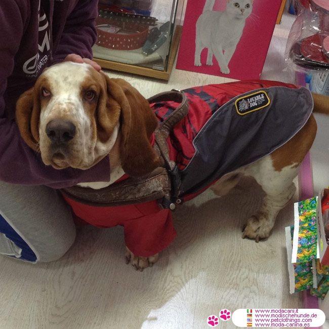Impermeabile Bully Rosso in Nylon per Cani Grandi #ModaCani #BassetHound - Impermeabile per cani di taglia grande (Bulldog, Labrador, Golden Retriever, ...), in colore Rosso e grigio, con al centro il disegno di un bulldog