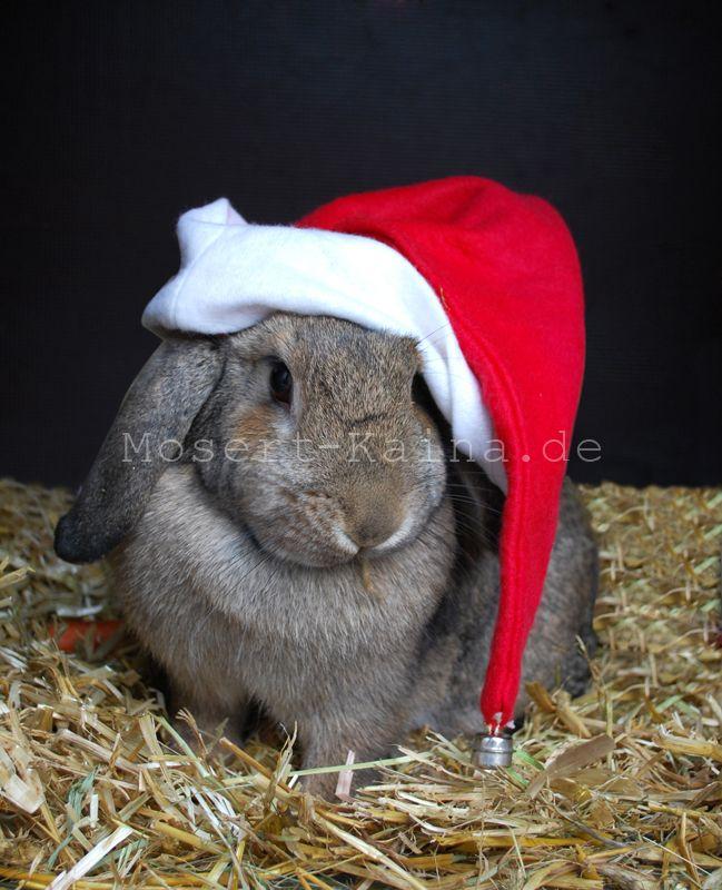 Einen schönen #Nikolaustag wünscht Euch #mosert-kaina.de