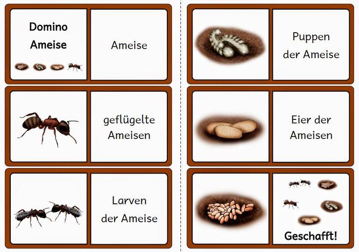 krabbelwiese: Dominos zu den bisherigen Lebenszyklen Ameise  Insekten Metamorphose