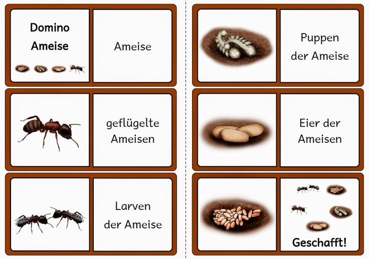 krabbelwiese: Dominos zu den bisherigen Lebenszyklen
