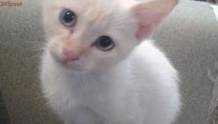 Belo gatinho branco busca adotantes no Itaquera, em SP
