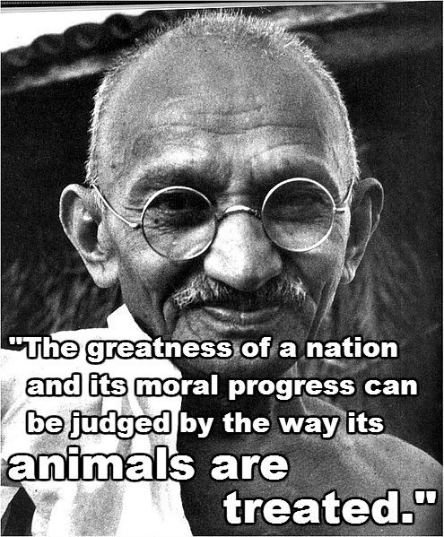 Ghandi....We don't hunt and murder Foxes...Civilized.