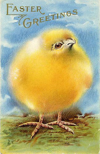 Fluffy yellow chick postcard. Too cute.   For scrapbooking, altered art, gift tags, framing, cards. Pretty!  Vintage Easter Postcard, via Flickr.