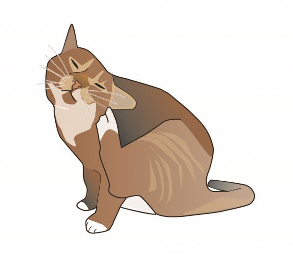 Clinical Signs Steroids May Be Given Orally Or By Injection Depending On The Cat S Condition If Steroids Ar With Images Cat Allergies Cat Symptoms Most Common Allergies