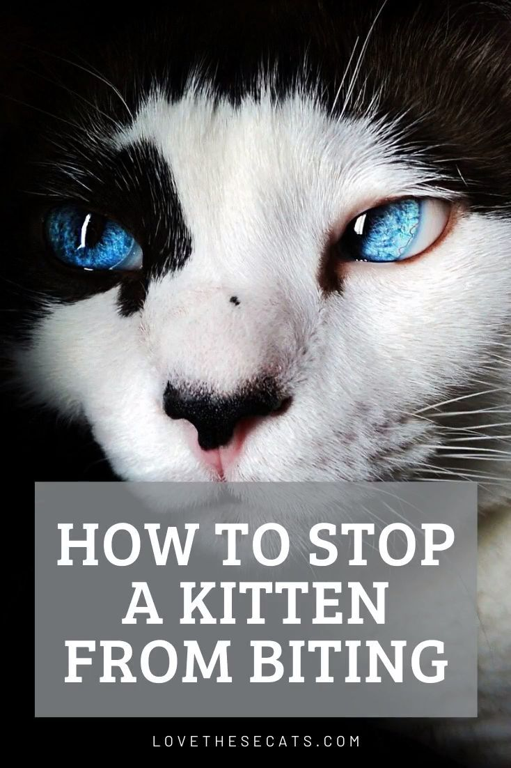 How To Stop A Kitten From Biting Scratching In 2020 Kitten Biting Cat Quotes Cat Parenting
