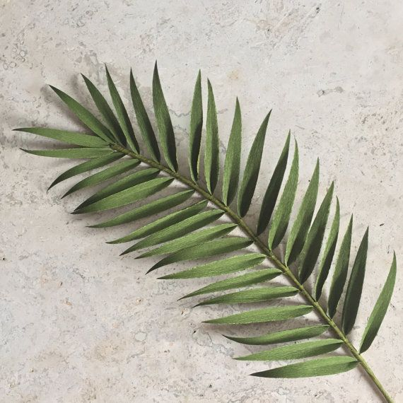 This single stem palm frond is highly detailed and realistic. Beautiful on its own or in an arrangement, they are sure to add a tropical feel to your home decor, at your wedding, or anywhere you care to enjoy it. Made with extra-fine German double-sided crepe paper to accentuate the organic look, this stem of greenery will never wilt or die. Each palm frond is on an 18 stem that can be cut or bent to fit in any vase you desire. (Vase pictured is not included.)  The price of shipping is based…