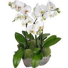 vazo çiçekleri çeşitleri - Google'da Ara