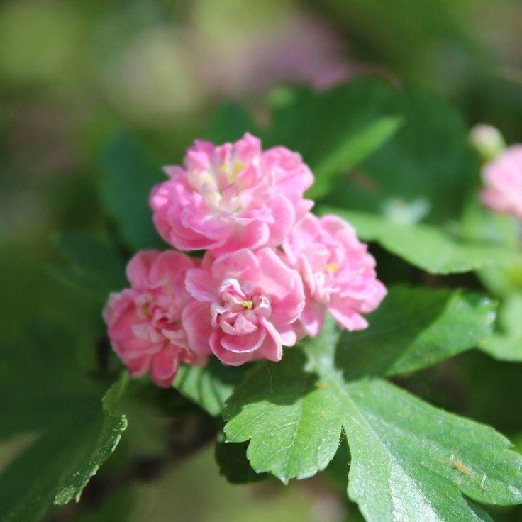Крымская весна такая красивая. Я вспоминаю как мы в мае наслаждались цветущей Феодосией.  _____________ Скучаю. А еще мечтаю на цветение маков попасть, съездить, слетать ������ _____________ А еще мечтаю посмотреть на зимний шторм в Ялте ������ . . . #крым #весна #цветы #красота #мечта #феодосия #люблю #wonderful #worldplaces #wonderful_places #traveling #travelphotography #travel #instadayli #instago #igtravel #ig_travel #natgeo #naturephotography #nature #instagood #crimea #feodosia…