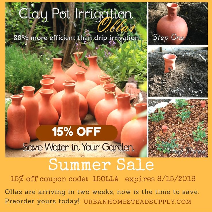 Irrigation with ollas (unglazed clay pots) is simple and extremely efficient, but the system gave way to modern watering techniques decades ago. With this type of irrigation, gardeners fill unglazed clay urns with water and bury them near plants. The tops of the ollas (pronounced OH-yas) extend above ground so the urns can be …
