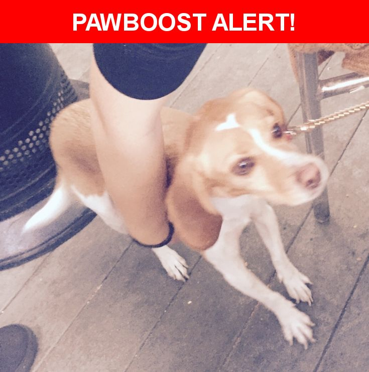 Is this your lost pet? Found in West Covina, CA 91790. Please spread the word so we can find the owner!  Description: Found 11/24/2016 Thanksgiving morning around 9Am on Sunset and West Covina Pkwy in West Covina.  Dog is microchipped but chip was never registered. Bought at Pets, Pets, Pets,   Nearest Address: sunset and west covina pkwy