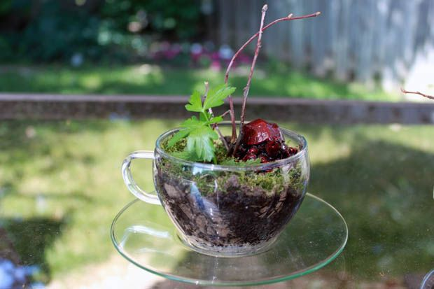 แบบสวนสวย10 Diy, Terrariums Ideas, Diy Terrariums, Gift Ideas, Diy And Crafts, Diy Glasses, Teacups Terrariums, Easy Diy, Glasses Terrarium