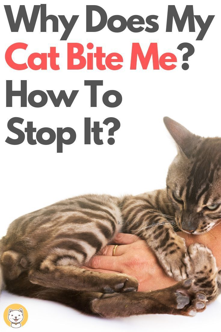 A Complete Guide For Pet Owners Why Does My Cat Bite Me