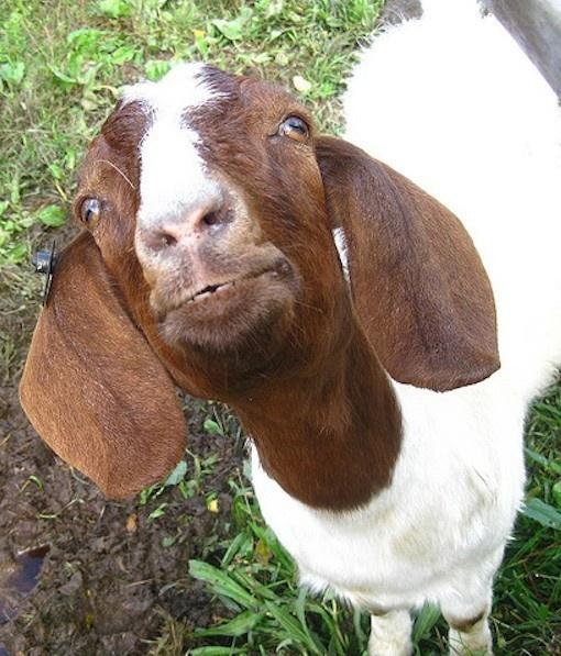12030 best animals images on Pinterest | Horses, Beautiful ...