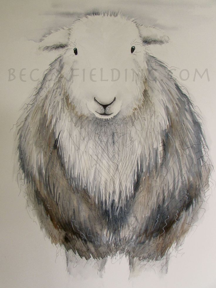 One of my Herdwick sheep watercolour paintings, more at www.beccafielding.com