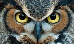 Live Cam - I'm watching Great Horned Owls on @explore.org's Owl Cam, streaming live from Montana:
