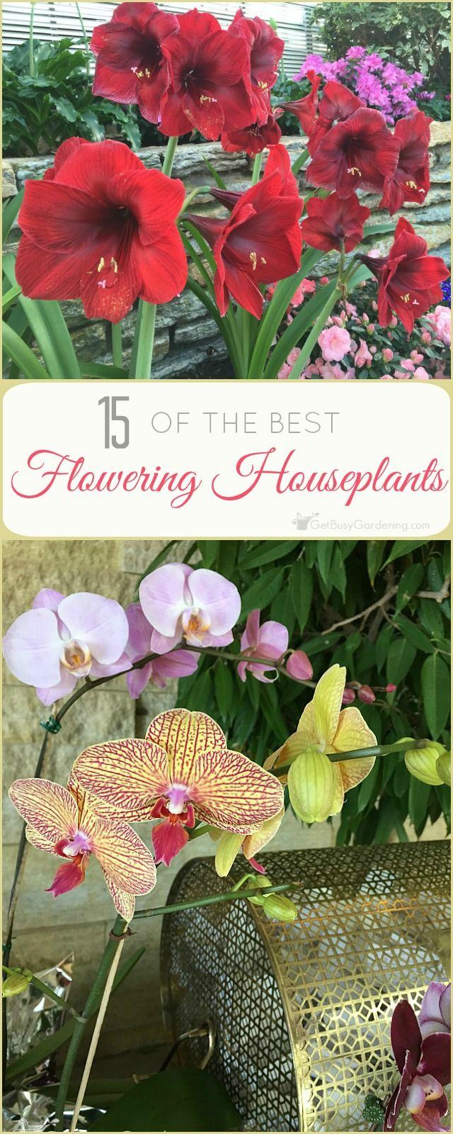the 25 best indoor flowers ideas on pinterest indoor flowering plants plants indoor and inside plants