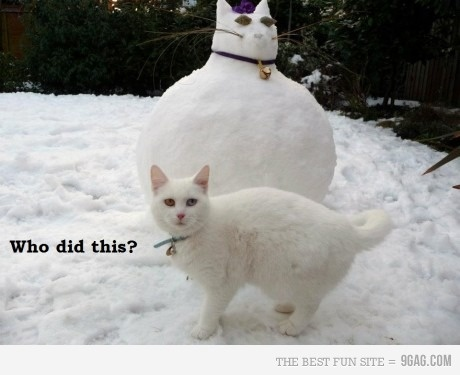 poor kitty: Funny Cat, Fat Cat, Snow Cat, Funnycat, Fatcat, Dr. Who, Snowcat, Animal, White Cat