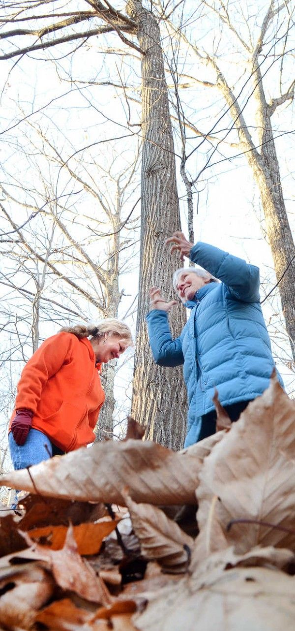 """HEBRON, Maine — A contest to find the largest trees in Oxford County may have uncovered the tallest American Chestnut tree in the state and perhaps the country. """"We're really excited about all of this,"""" Jean Federico of the Oxford County Soil and Water Conservation District, sponsor of the annual [...]"""