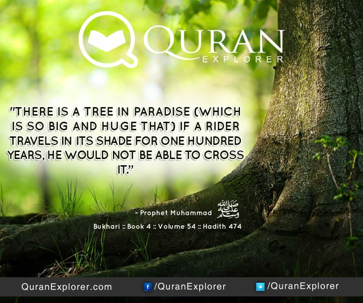 Image result for quranic ayat tree