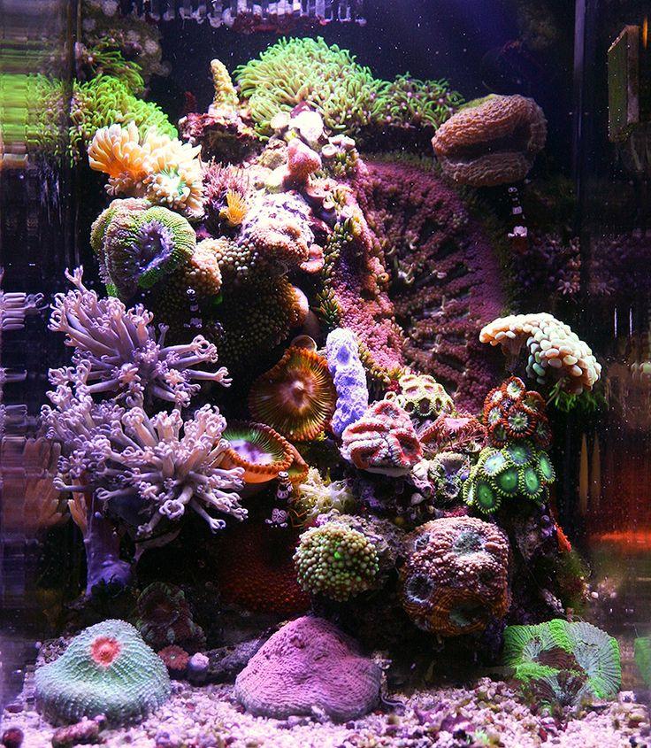 268 Best Ideas About Nano Reef Aquariums On Pinterest